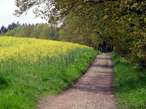 Wanderweg in Kleinolbersdorf